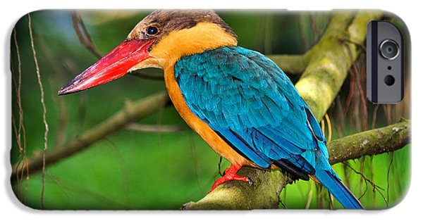 Stork-billed Kingfisher IPhone 6s Case by Louise Heusinkveld