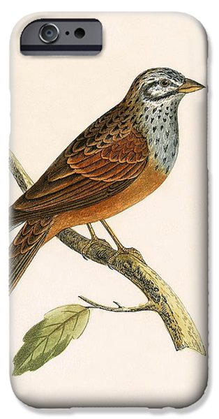 Striolated Bunting IPhone 6s Case by English School