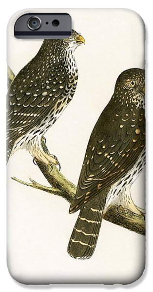 Strix Pusilla IPhone Case by English School