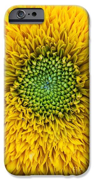 Sunflower Teddy Bear IPhone Case by Tim Gainey
