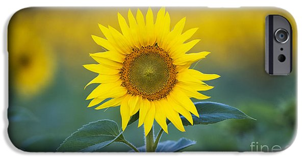 Sunflower IPhone 6s Case by Tim Gainey