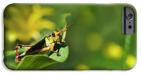 Green Grasshopper IPhone 6s Case by Christina Rollo