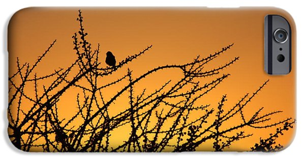 Sunset Survey IPhone Case by Brian Boyle