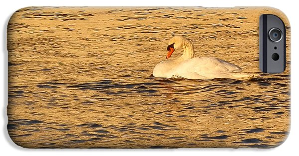 Swan In Stockholm Waters IPhone Case by Margaret Brooks