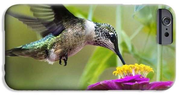 Sweet Success Hummingbird Square IPhone 6s Case by Christina Rollo