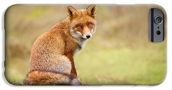 Fox IPhone Case featuring the photograph That Look - Red Fox Male by Roeselien Raimond