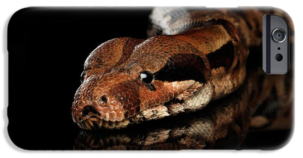 The Boa Constrictors, Isolated On Black Background IPhone 6s Case by Sergey Taran