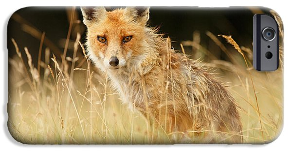Fox IPhone Case featuring the photograph The Catcher In The Grass - Wild Red Fox by Roeselien Raimond