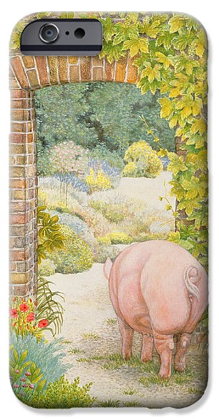 The Convent Garden Pig IPhone Case by Ditz