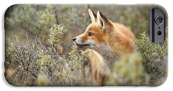 Fox IPhone Case featuring the photograph The Fox And Its Prey by Roeselien Raimond