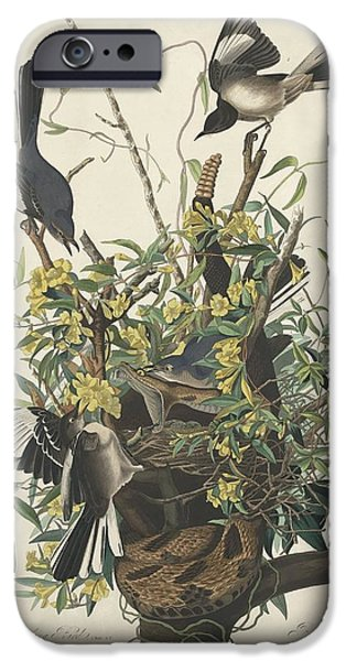 The Mockingbird IPhone 6s Case by John James Audubon