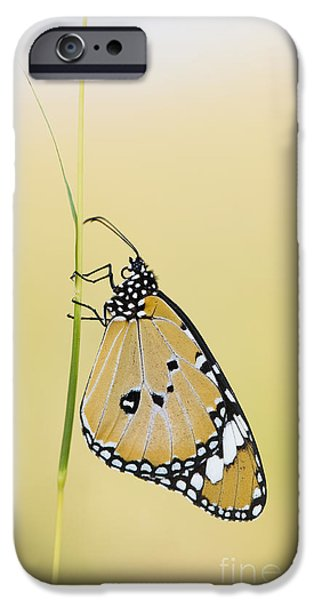 The Plain Tiger Butterfly  IPhone Case by Tim Gainey