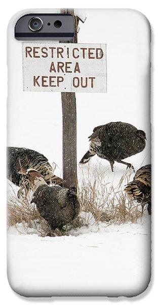 The Turkey Patrol IPhone 6s Case by Mike Dawson