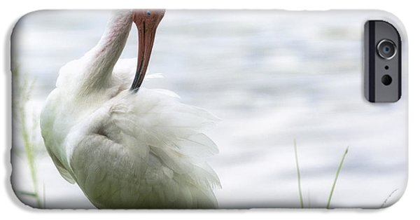 The White Ibis  IPhone 6s Case by Saija  Lehtonen