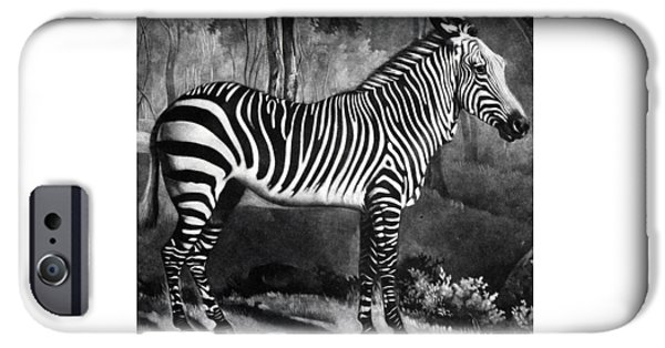 The Zebra IPhone 6s Case by George Stubbs