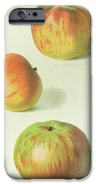 Three Apples IPhone 6s Case by English School