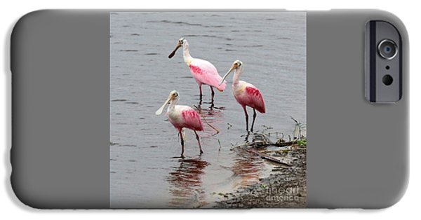 Three Roseate Spoonbills Square IPhone 6s Case by Carol Groenen