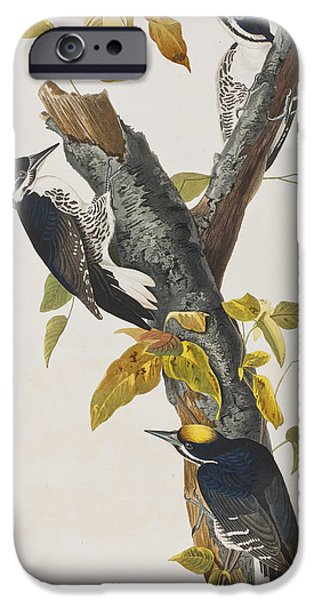 Three Toed Woodpecker IPhone Case by John James Audubon
