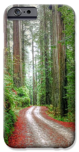 Through The Redwood Forest IPhone Case by Juli Scalzi