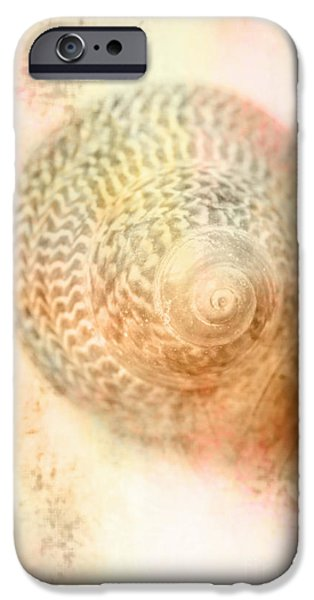Top Down View Of Spiral Sea Shell IPhone Case by Jorgo Photography - Wall Art Gallery