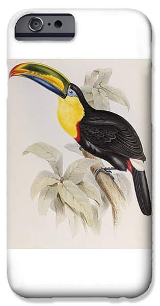 Toucan IPhone 6s Case by John Gould