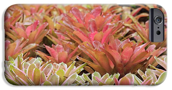 Tricolor Bromeliad IPhone Case by Jamie Gray