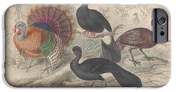 Turkeys IPhone 6s Case by Oliver Goldsmith