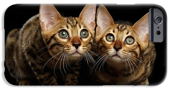 Two Bengal Kitty Looking In Camera On Black IPhone 6s Case by Sergey Taran