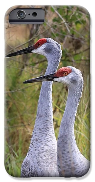 Two Sandhills In Green IPhone 6s Case by Carol Groenen