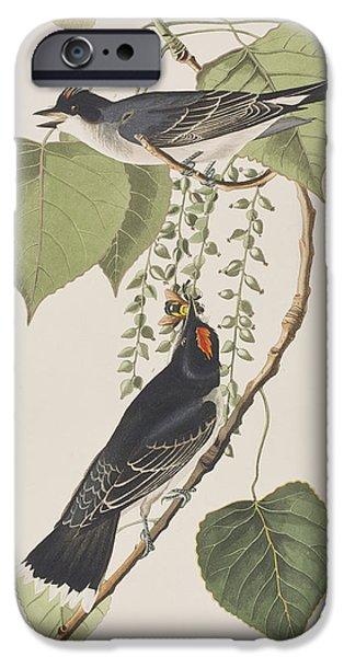Tyrant Fly Catcher IPhone 6s Case by John James Audubon