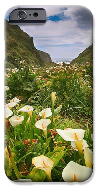 Valley Of The Lilies IPhone Case by Laurie Search