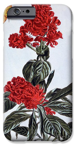 Variety Of Amaranthus IPhone Case by Pierre-Joseph Buchoz