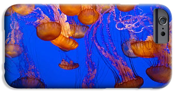 View Of Jelly Fish Underwater IPhone Case by Panoramic Images