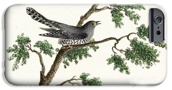 Vintage Black Bird On Tree Limb IPhone Case by Gillham Studios