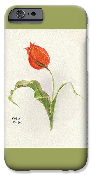 Vintage Tulip Watercolor IPhone Case by Edward Fielding