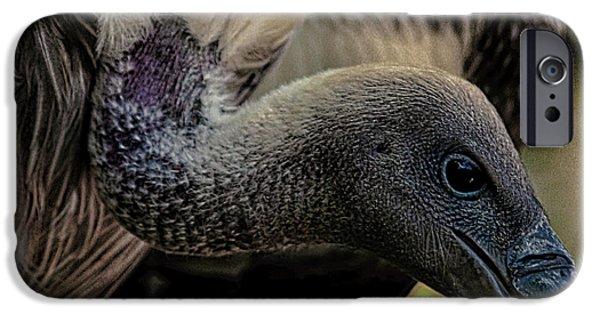 Vulture IPhone 6s Case by Martin Newman