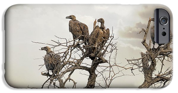 Vultures In A Dead Tree.  IPhone 6s Case by Jane Rix