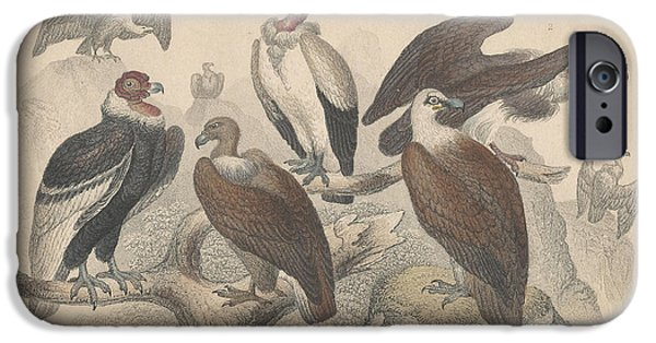 Vultures IPhone 6s Case by Oliver Goldsmith