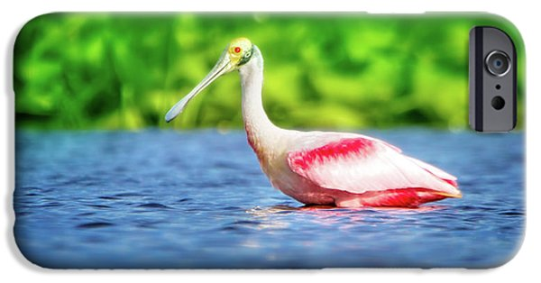 Wading Spoonbill IPhone 6s Case by Mark Andrew Thomas