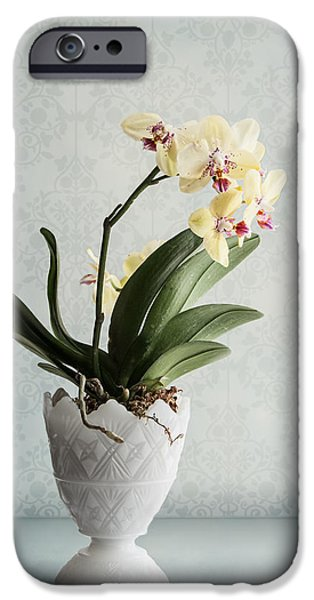 Waiting For Spring IPhone Case by Maggie Terlecki