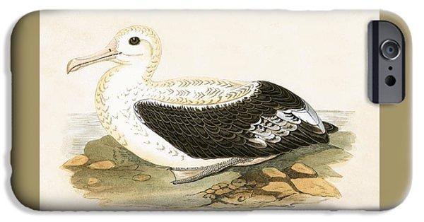Wandering Albatross IPhone 6s Case by English School
