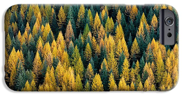 Western Larch Forest IPhone Case by Leland D Howard