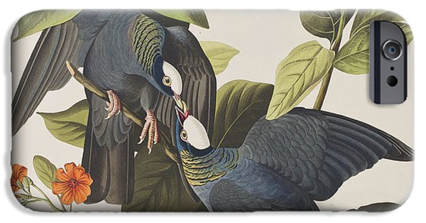White Crowned Pigeon IPhone 6s Case by John James Audubon