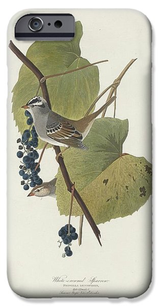 White-crowned Sparrow IPhone 6s Case by John James Audubon