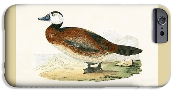 White Headed Duck IPhone Case by English School