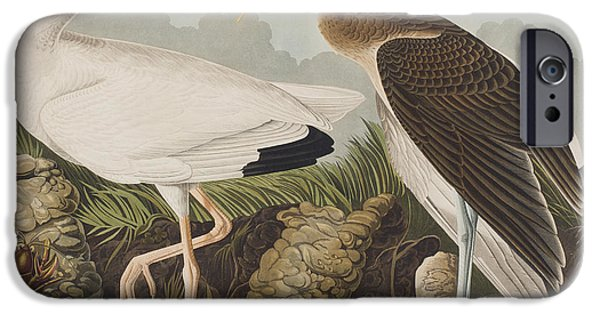 White Ibis IPhone 6s Case by John James Audubon