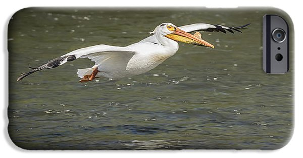 White Pelican 1-2015 IPhone Case by Thomas Young