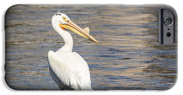 White Pelican 2-2015 IPhone Case by Thomas Young