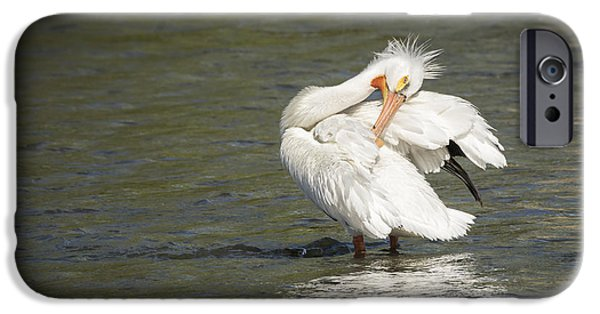 White Pelican 3-2015 IPhone Case by Thomas Young