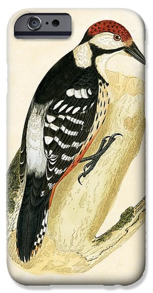 White Rumped Woodpecker IPhone Case by English School
